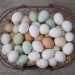 vitamin-d3-eggs.jpg.w300h200