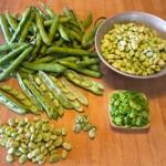 fava-beans-prepared