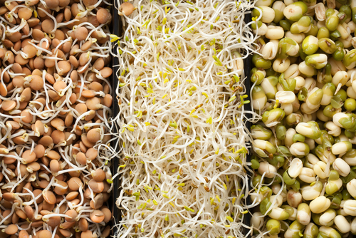 sprouts 3 types v_ small